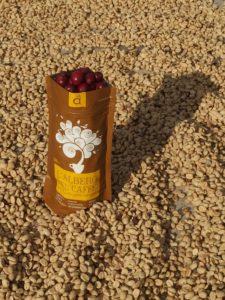 I Frutti dell'Albero del Caffè